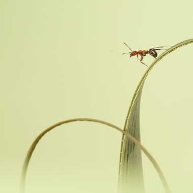 Acrobatie par Farim