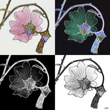 Variation sur fleur par mamichat