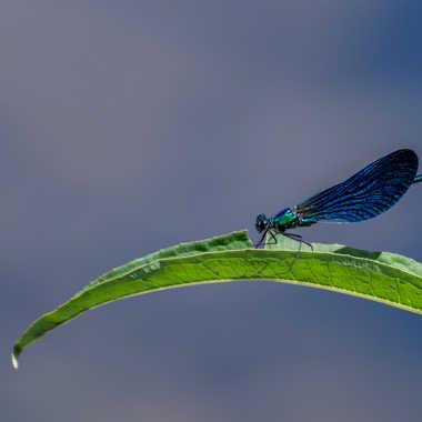 bleu Libellule  par Dav.sv