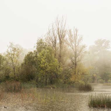 Impression sous la brume par Fillion