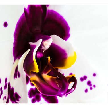 orchidée par Nicolas Belmontet