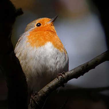 Caché dans les branches... par Nikon78