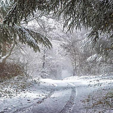 Chemin forestier sous la neige. par patrick69220