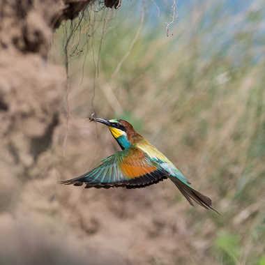 L'arrivée au nid par jeromebouet