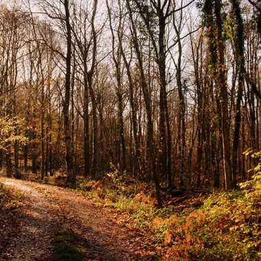 Lumière d'automne par mamichat