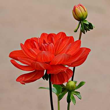 Flamenco floral par mamichat