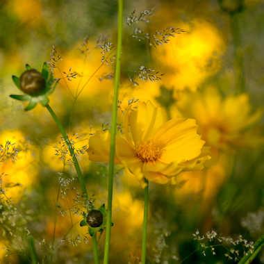 La vie en jaune par ChrisO7