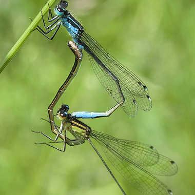 Les acrobates par Nikon78