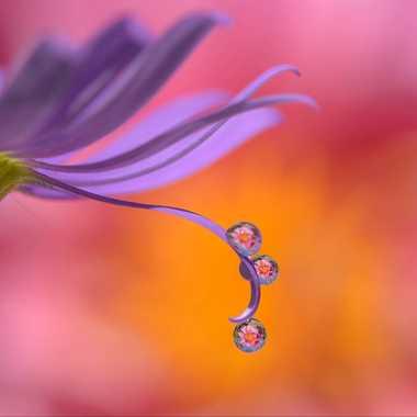Perles de douceur par Andrea_Zehnder