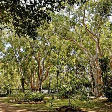 Jardin botanique de Cooktown par rmgelpi