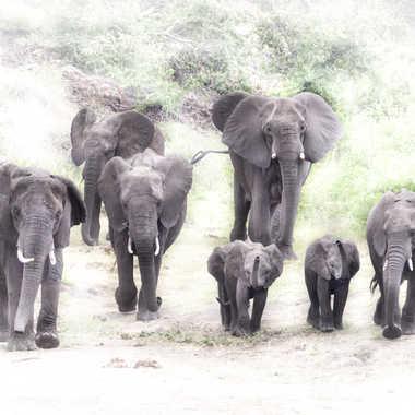 Éléphants d'Afrique par patrick69220