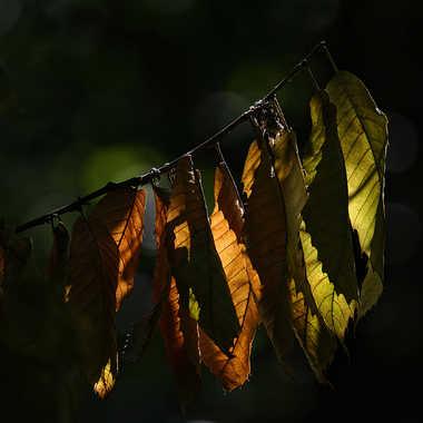 Flammes végétales par Nikon78