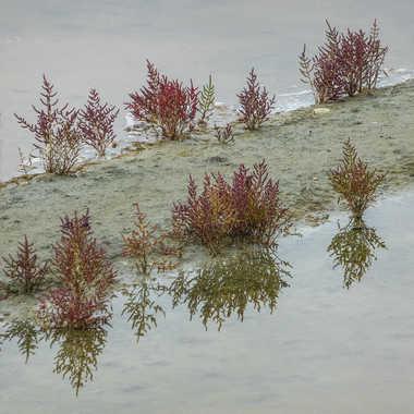 Dans les marais salants.. par Micheldechelles