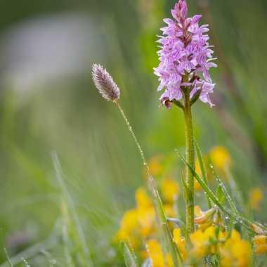 Orchidées par Guy07