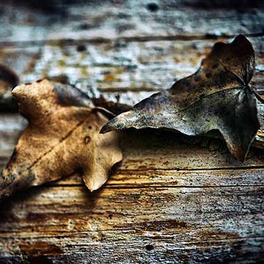 Saveurs d'automne par Valérie Tirard