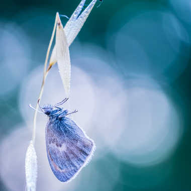 BLUE on BLUE ! par Franck06