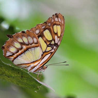 ferme aux papillos 2 par FIDJIE