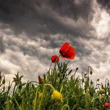 Sous les nuages par brj01