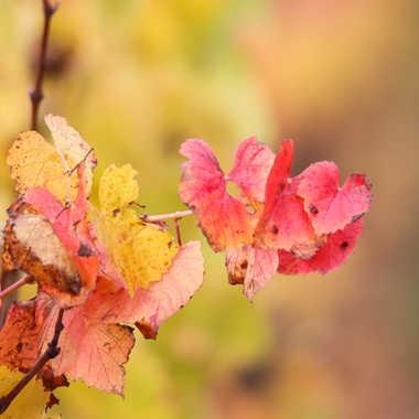 Feuille d'automne par patrick69220