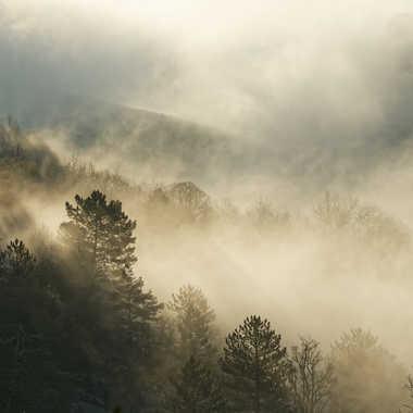 Entre brume et lumière. par Philgreffe