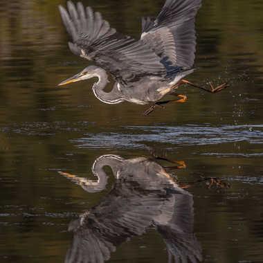 Il court sur l'eau  par james_1068