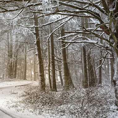 Route forestière sous la neige. par patrick69220