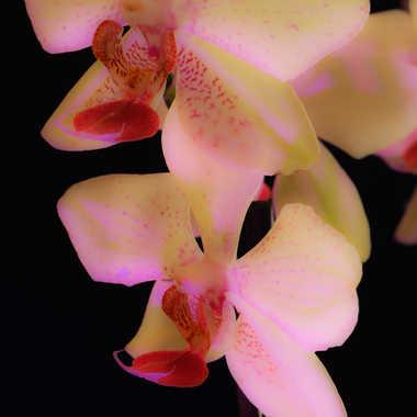 orchidée 2 par brj01