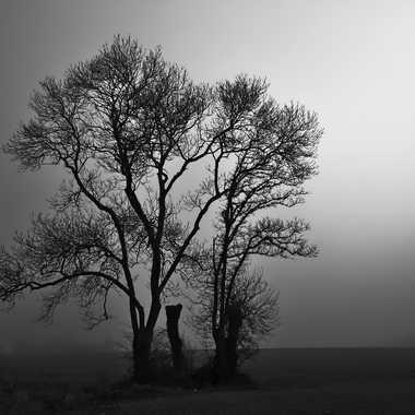 Silhouette par PSEG