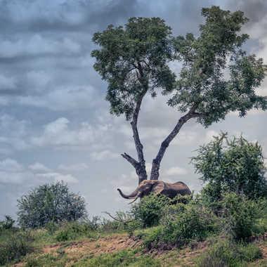 Paysage africain par patrick69220