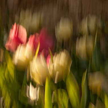 Peinture florale Tlalaienne... par Philipounien