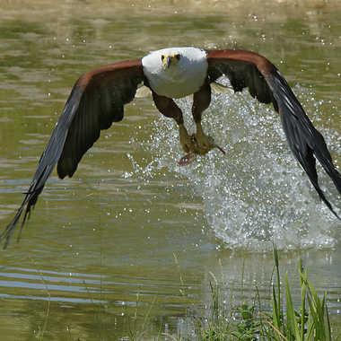 Bonne pêche par Nikon78