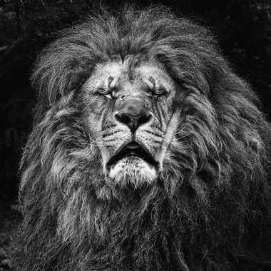 La sieste du Roi par patrick69220