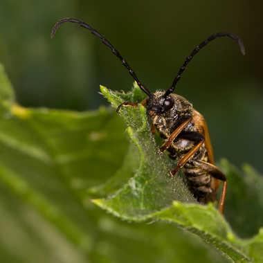 Insecte du jardin par jean-Luc