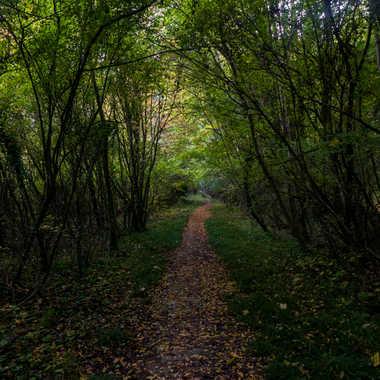 Chemin sans fin par liliplouf