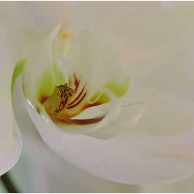 orchidee par genevieve_3824