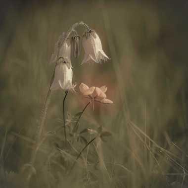 Petites fleurs par Guy07
