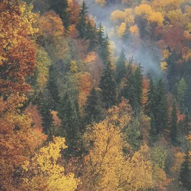 Couleurs d'automne par Farim
