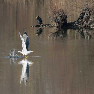 Marcher sur l'eau par patrick69220