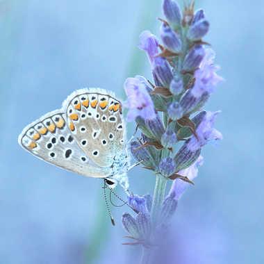 Le nectar. par Philgreffe