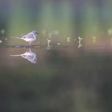 Seule sur l'étang par jeromebouet