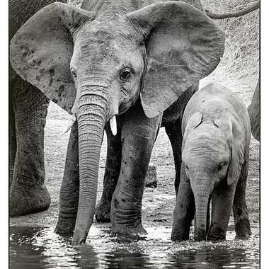 Eléphanteaux au point d'eau par patrick69220