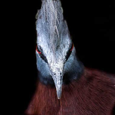 Pigeon punk par patrick69220