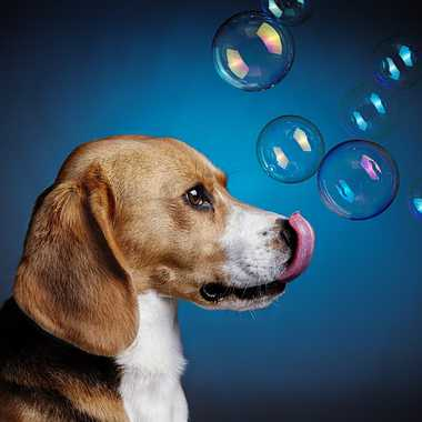 chien à bulles par Joliemaman
