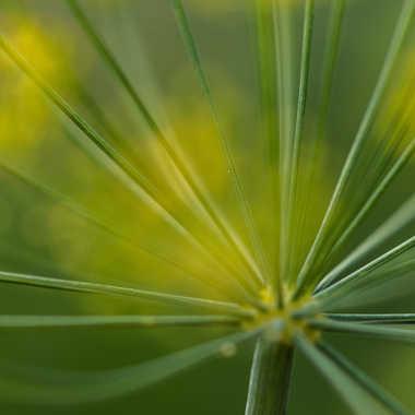 Graphisme végétal par bobox25