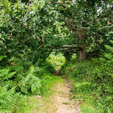 Au coeur de la forêt par liliplouf