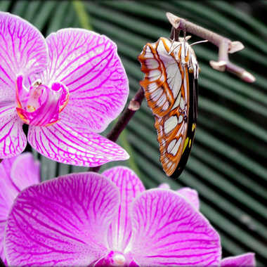 Fleurs et Papillon par clero