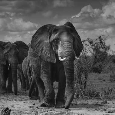 Géants d'Afrique par patrick69220