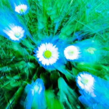 zooming bleu  par brj01