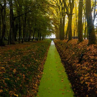 Chemin de verdure par liliplouf