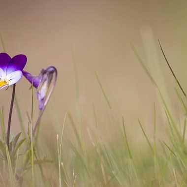 Floraison sauvage par patrick69220